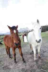 www.creativenook.co.za_minette&chris_photography_horses